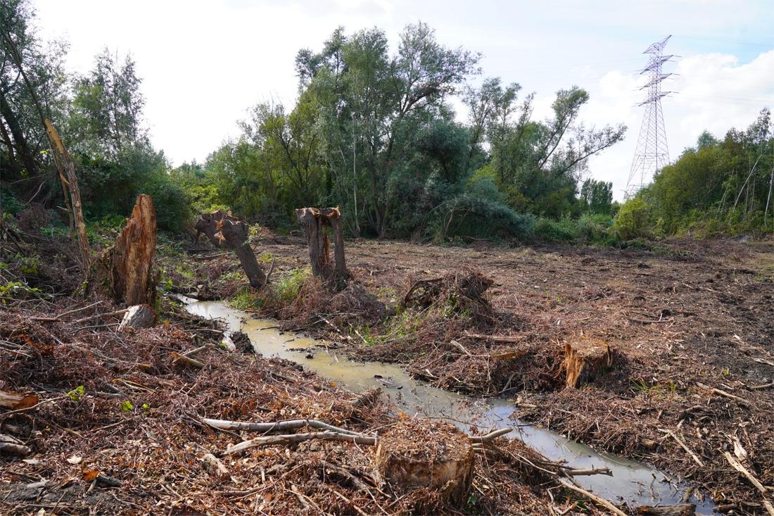"""Bewoners boos op oefenterrein van De Lijn: """"Laatste bomen worden gekapt"""" - Het Nieuwsblad"""