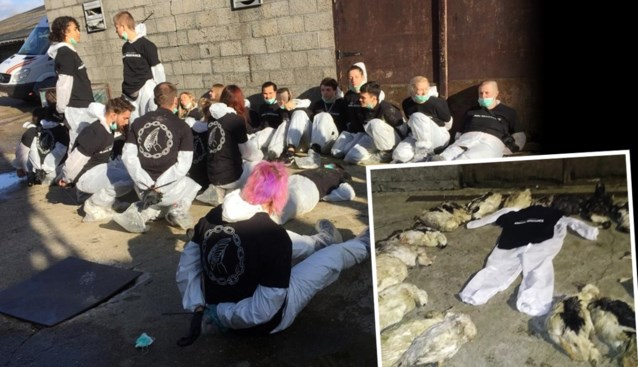 """183 eenden gestorven na actie van Animal Resistance: """"Ze denken dat ze dierenvrienden zijn, maar wat ze hebben gedaan is heel erg dom"""""""