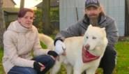 """Hond Bobby redt baasje Stijn (47) uit brand: """"Als hij mij niet had gewekt, was ik er niet meer"""