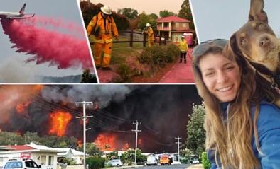 """Vlamingen in Australië getuigen over """"rampzalige"""" bosbranden: """"Het ziet er apocalyptisch uit"""""""