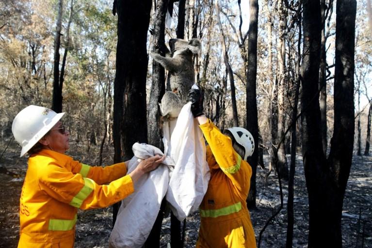 Australië in hoogste staat van paraatheid: zelfs binnenstad van Sydney bedreigd door bosbranden