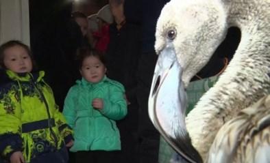 Exotische vogel verdwaalt en belandt in een van de koudste plekken ter wereld
