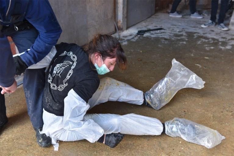 """Animal Resistance reageert op kritiek na actie bij foie gras-producent : """"De mortaliteit ligt sowieso hoog"""""""