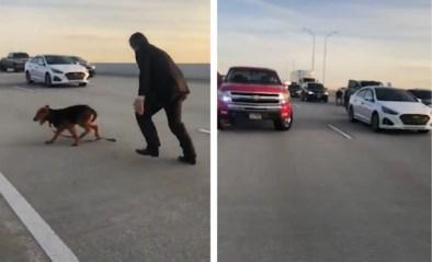 Hond kiest het hazenpad tijdens ongeluk in het midden van autosnelweg en veroorzaakt chaos