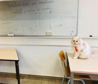 """Hij werd gepest in asiel, maar nu is iedereen fan van Mando de Campuskat: """"Hij laat zich aaien door iedereen"""""""