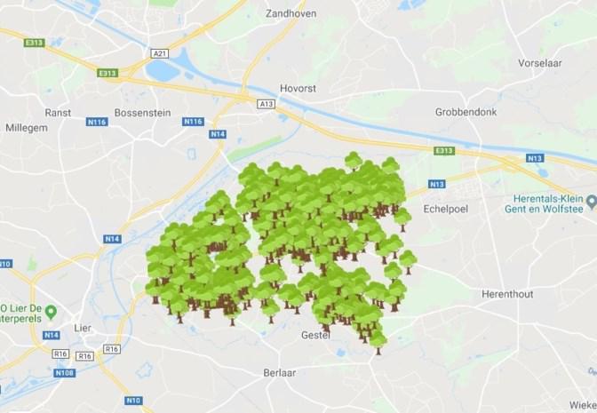 """Leuven én groot deel van Kempen kopieert Nijlens bomenproject: """"Blij dat we inspiratiebron kunnen zijn"""" - Het Nieuwsblad"""