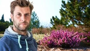 Het hele jaar bloeiende bloemen: Bartel Van Riet tipt heideplanten