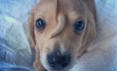Achtergelaten puppy heeft een staartje op zijn kop