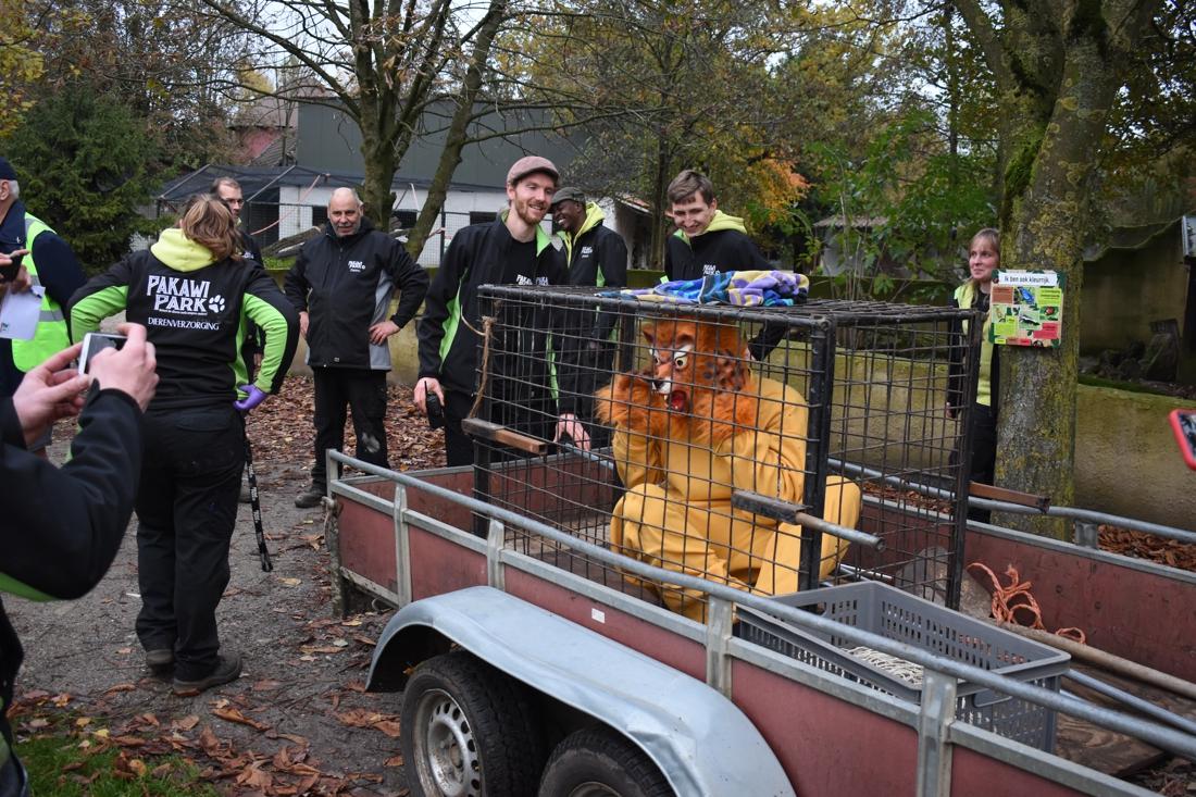 """Acteurs kruipen in leeuwen- en apenpak voor noodplanoefening: """"Bij een echt dier reageren we wellicht anders"""" - Het Nieuwsblad"""