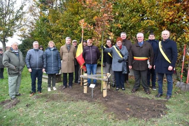 Vredesboom geplant op begraafplaats in Bellingen