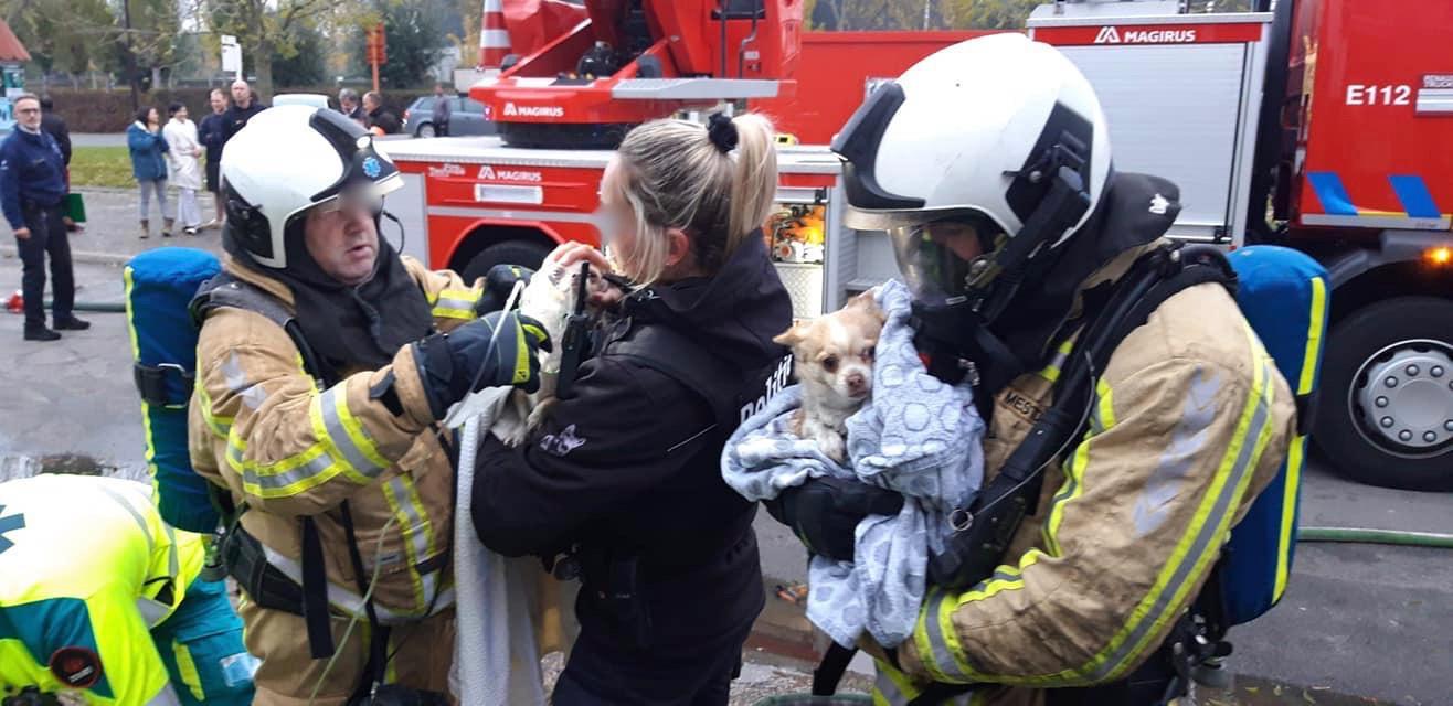 """Vader, zoon en drie hondjes overleven zware brand: """"Gezin is enorm onder de indruk"""" - Het Nieuwsblad"""