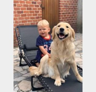 """Kimberley en zoontje Liano zoeken al twee weken naar hun hond: """"We denken dat Luna ontvoerd is"""""""