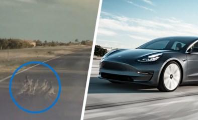 Eenden op de weg? Tesla heeft nog net op tijd manoeuvre in petto dankzij automatische piloot