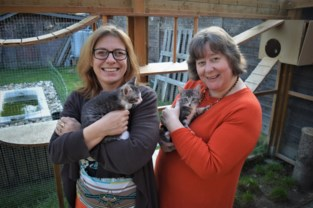 Sylvie en Brenda blazen dierenasiel nieuw leven in