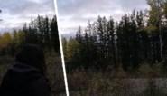 Familie tijdens jacht opgeschrikt door mysterieuze kreten in bos
