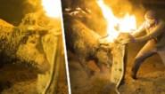 """Eeuwenoud festival oogst veel controverse door horens van stier in brand te steken: """"Barbaars"""""""