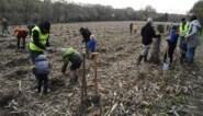 Gezamenlijke plantactie levert 3.500 nieuwe bomen op in Halle