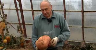 Alfred plantte acht maanden geleden één zoete aardappelplant: nu valt hij achterover van de oogst