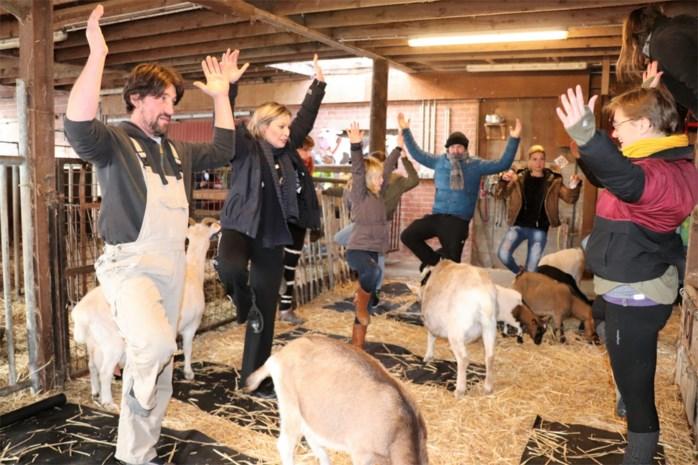 "Roos Van Acker neemt deel aan sessies op kinderboerderij :""Yoga tussen de geitjes, apart maar ook heel ontspannend"""