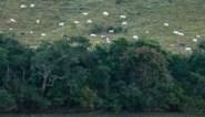 Ontbossing in Braziliaanse Amazonegebied op hoogste niveau sinds 2008