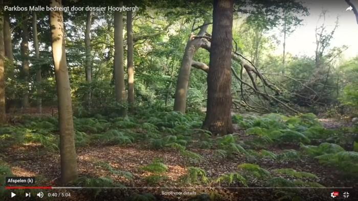 Natuurpunt stapt naar Raad van State om vleermuizen te redden, gemeente wil van bos industriegebied maken