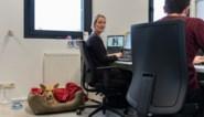 """Op deze hogeschool zijn 'kantoorhonden' toegelaten: """"Minder stress op de werkvloer"""""""