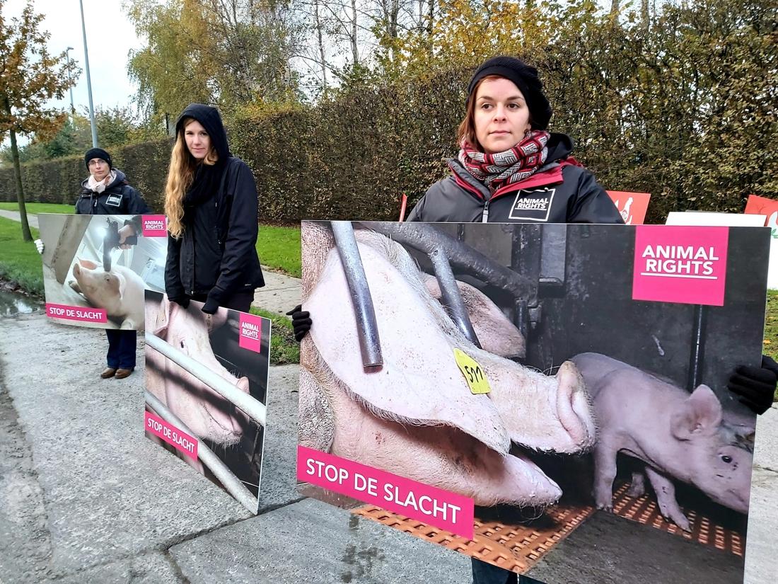 """Animal Rights voert actie week voor rechtszaak: """"Wij willen dat het slachthuis de deuren sluit"""" - Het Nieuwsblad"""