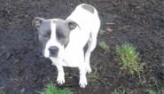 """Man die ammoniak op hond giet riskeert 6 maanden cel: """"Mijn enige compagnon raakte deels blind"""""""