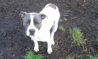"""Man die ammoniak op hond giet riskeert 4 maanden cel: """"De hond raakte deels blind"""""""