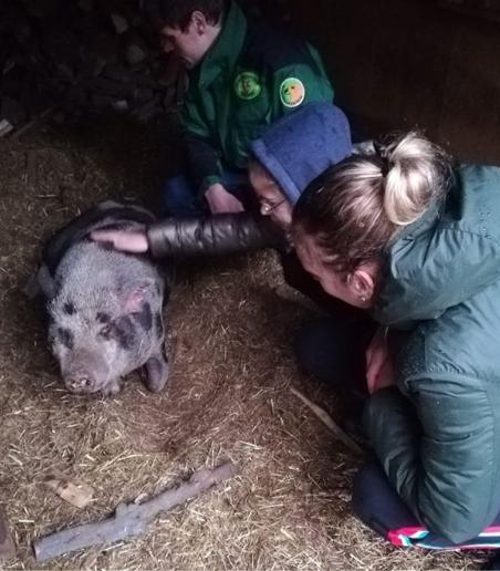 """Elise Mertens steekt handen uit de mouwen in opvangcentrum voor dieren: """"Een erg leerrijke dag"""""""