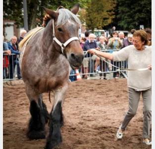 Provincie subsidieert paarden van Hakendover