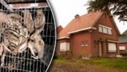 """Honderdtal dode konijnen liggen al meer dan 15 jaar in kooien in 'horrorstal': een """"zeldzame misdaad"""" of een drama zonder schuldige?"""