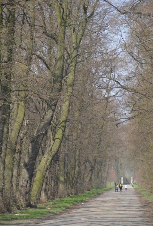 Autovrije Boze Dreef moet Ertbrugge beter beschermen