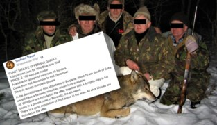 """Voor 2.750 euro laat Vlaams bedrijf u jagen op wolven: """"We doen niks mis"""""""