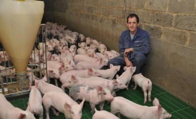Opnieuw verzet tegen uitbreiding van varkensstal