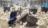 Provincie volgt gemeente Peer en geeft geen vergunning voor diervriendelijke megastal