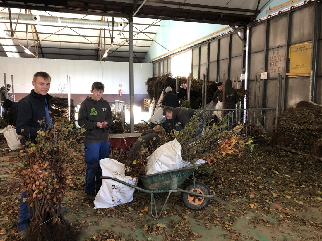 """Studenten verpakken 60.000 boompjes en struiken voor Behaag onze Kempen: """"Als je even bezig bent, leer je gauw bij"""""""