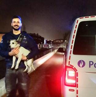 Agenten halen straffe toeren uit om hondje uit water te redden