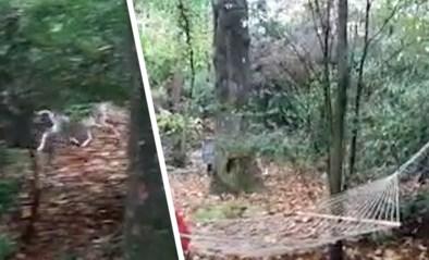 Gezin met grote tuin krijgt familie wilde herten op bezoek