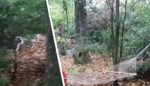 VIDEO. Gezin met grote tuin krijgt familie wilde herten op bezoek