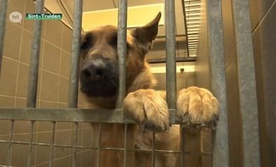 VIDEO. Dierenasiel Sint-Truiden zoekt gemotiveerde pleeggezinnen voor honden en katten
