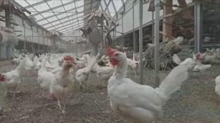 Definitief geen vergunning voor kippenstal in Peer
