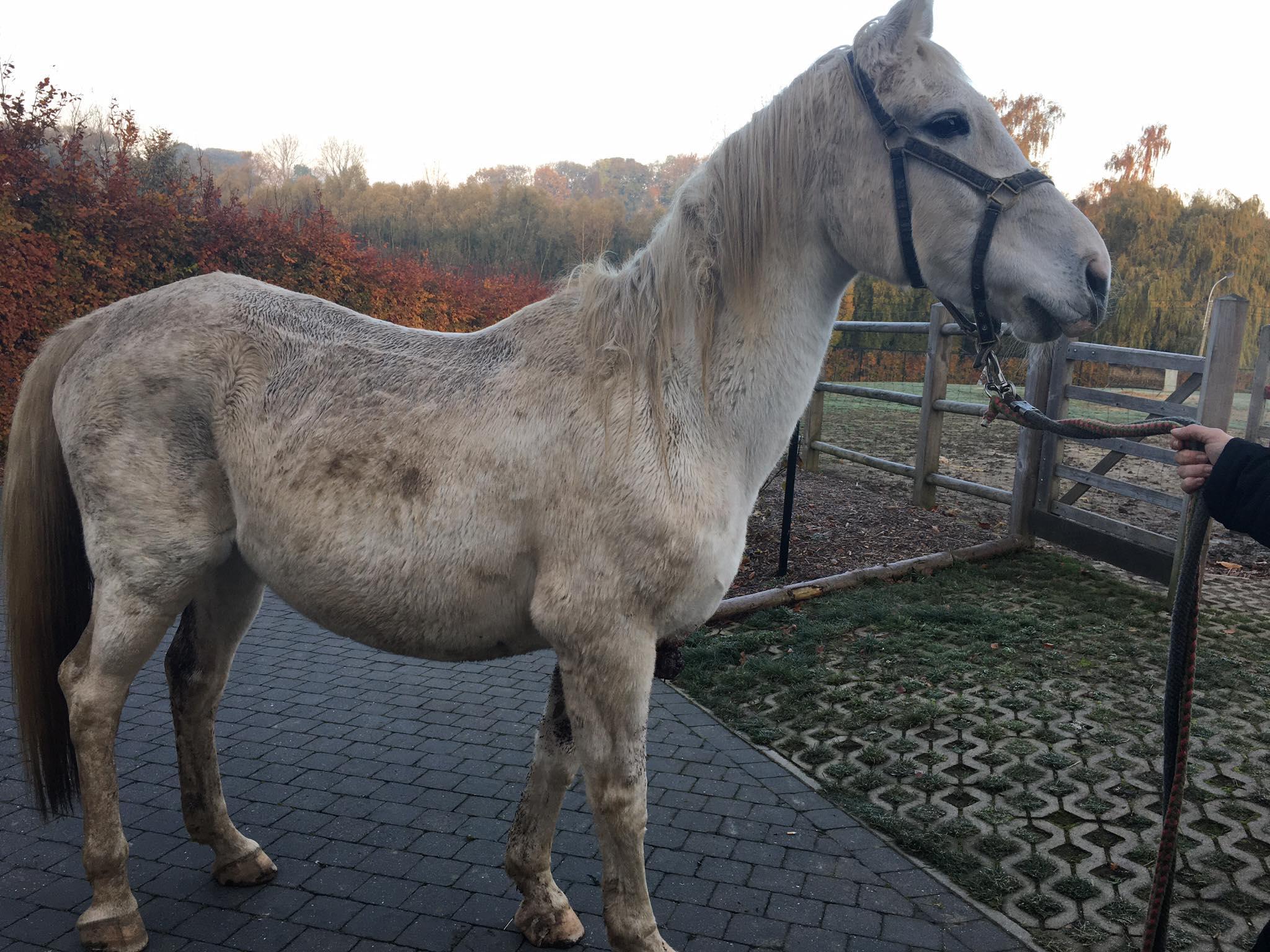 Paard met kanker alleen op de dool