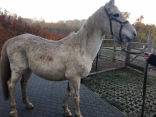 """Wit paard met kanker alleen op de dool: """"Zo een dier laat je toch niet aan zijn lot over"""""""