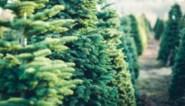 """Tien jaar geleden wilde niemand ze hebben, nu boomt de Belgische kerstboom: """"Alles zit mee. Het is alle hens aan dek"""""""
