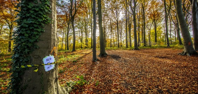 Al jaren een speelbos, maar nu wil eigenaar zijn bomen, zonder succes: houtbedrijf verliest kapvergunning na buurtprotest