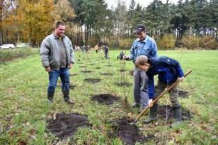 In plaats van 11.000 bomen armeris Vagevuurbos er plots 1.500 rijker