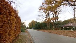 VIDEO. Rotselaar gaat illegale bomenkap in woonparkgebieden strenger controleren en bestraffen