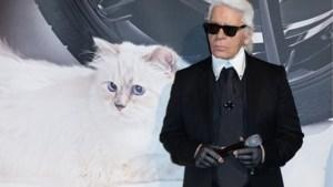 Choupette, de kat van Karl Lagerfeld, krijgt haar eigen fotoboek