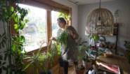 Dit is de moeilijkste periode voor je kamerplanten: zo voorkom je verwelkte bladeren en sterfgevallen